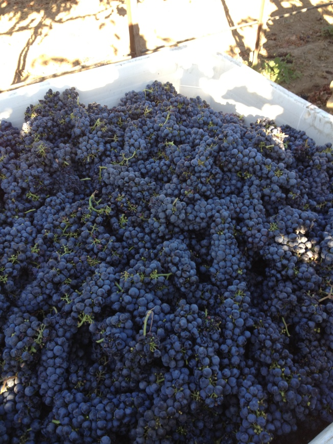 2012 Zinfandel Fruit
